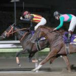 帝王賞2018覇者ゴールドドリーム。名実ともに現役最強ダート馬。